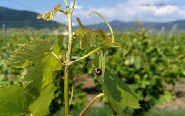 La vie dans nos vignes